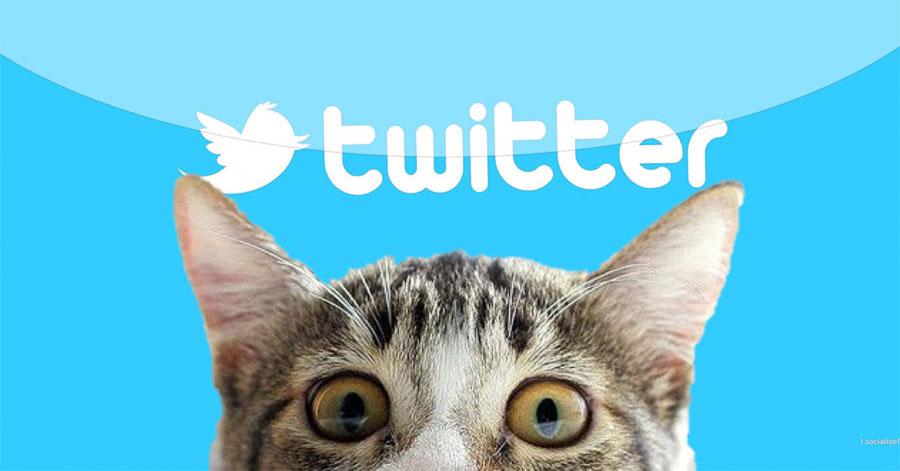 Katten de baas op Twitter tijdens mediastilte